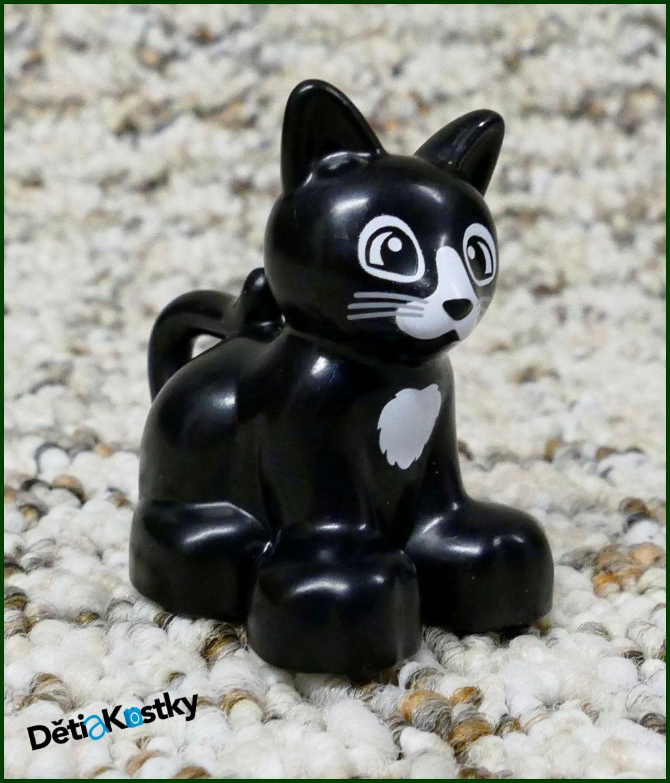 Černá n bílá kočička